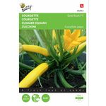 Graines de Courgette Gold F1