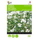 Graines de fleurs Gypsophile Covent Garden Blanc