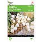 Graines de Oignon Blanc de Barletta
