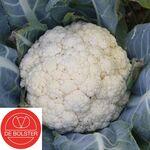 Bio graines Chou-Fleur Flora Blanca