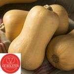 Bio Graines Courge Butternut