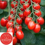BIO Tomate à Cerise Graines 'Bolstar Baloe F1'
