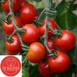 Bio Graines Tomate à Cerise 'Zuckertraube'