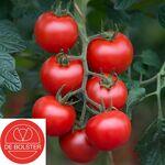 Bio Semences Tomate 'Bolstar Gimli F1'