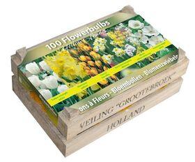 Bulbes à Fleurs 100 pièces