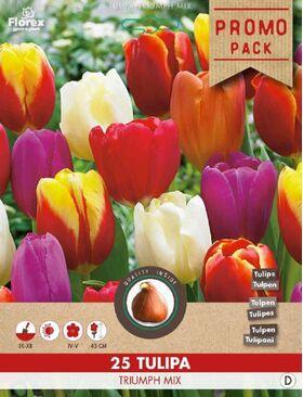 Bulbes à Fleurs Tulipe Triuph Mixture