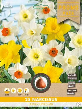 Narcissen bloembollen Geel Dutch Master