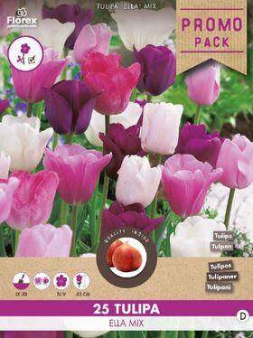 Bulbes à Fleurs Tulipe Jaune Tarda Dasystemon