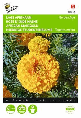 Graines de Rose D'Inde Naine