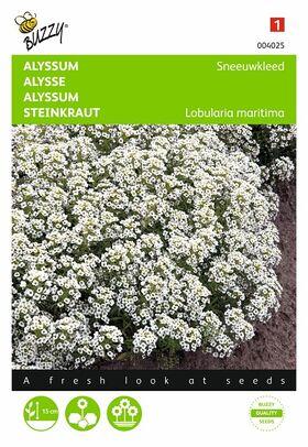 Graines de fleurs de l'Alysse