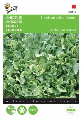 Les graines de Chicorée Scarole Verte à Cœur Plein