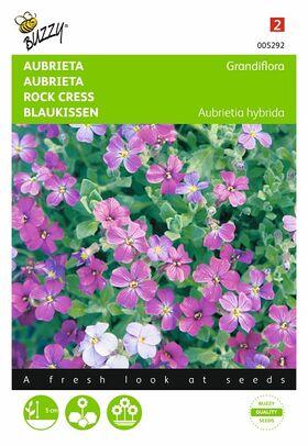 Graines de Fleurs Aubrietia Variée