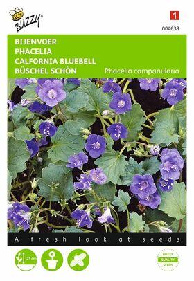 Grianes de fleurs Phacelia