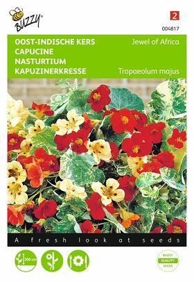 Graines de Capucine Nasturtium