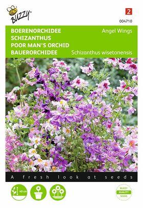 Graines de Schizanthus