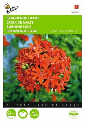 graines de Croix De Malte