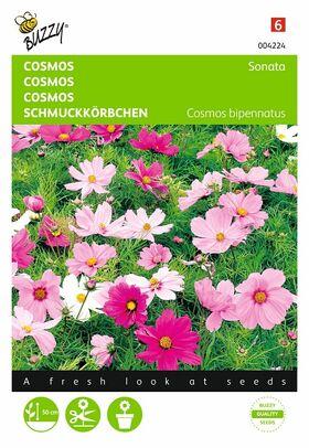 Graines de Cosmos