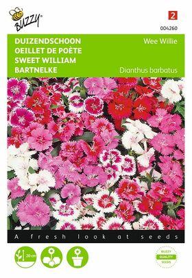 Graines de Fleurs Œillet de Poète Wee Willie Varié
