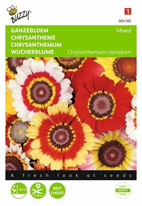 Graines de Fleurs Chrysanthème à Carène