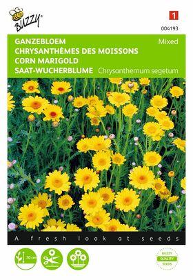 Graines de Chrysanthème des Moissons