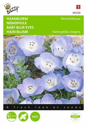 Graines de fleurs Némophile