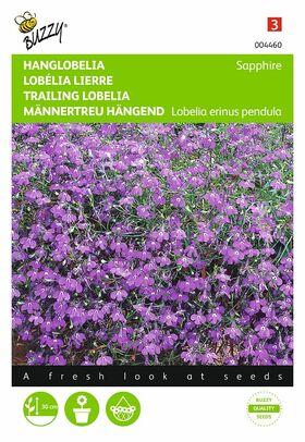 Graines de Lobélia Lierre Sapphire