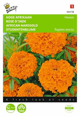 Graines de Rose D'Inde Hawaii Orange
