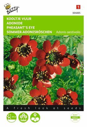 Graines de Fleurs Adonide