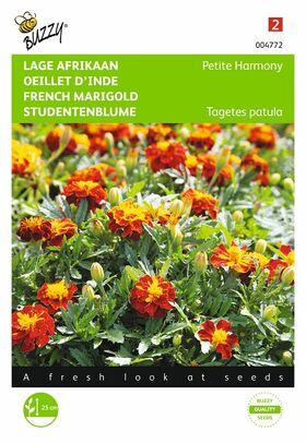 Graines de fleurs Œillet d'Inde Petite