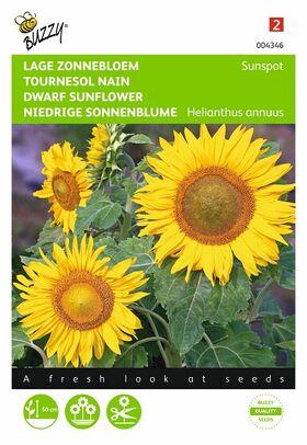 Graines de fleurs Tournesol Nain Sunspot