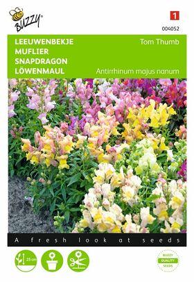 Semences de Fleurs Muflier Tom Thumb
