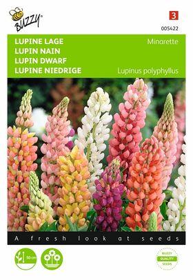 Graines de Fleurs Lupin Nain