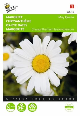 Graines de Chrysanthème May Queen