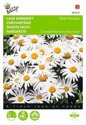 Graines de Chrysanthème Silver Princess