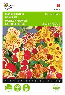 Graines de Fleurs Mimulus