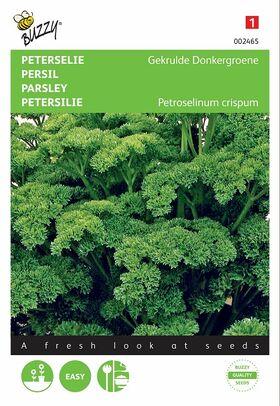 Graines de Persil