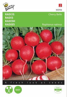 Graines de Radis Cherry Belle