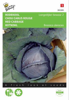 Graines de Chou Rouge Langedijk Tardif