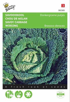 Graines de Chou de Milan Vert de Bruxelles