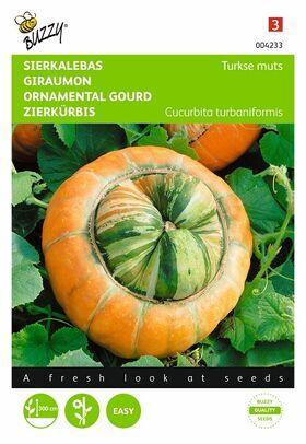 graines de Giraumons