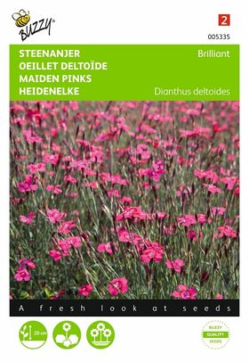 Graines de fleurs Œillet Deltoïde Brilliant