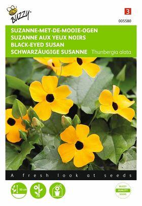 Semences Suzanne Aux Yeux Noire