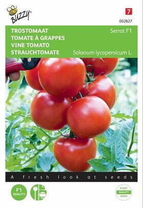 Graines de Tomate À Grappes