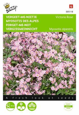 Grianes de Fleurs Myosotis Des Alpes