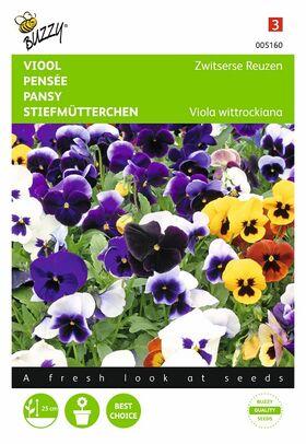 Graines de fleurs Pensée Géante de Suisse