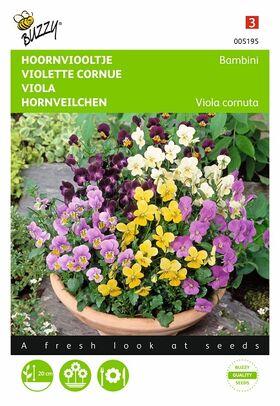 Graines de fleurs Violette Cornue, Bambini Varié