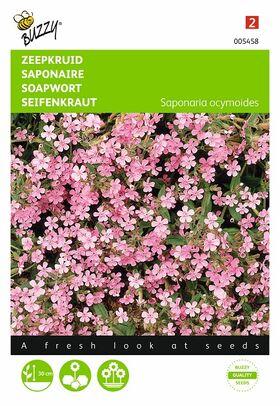 Graines de Fleurs Saponaire Rose