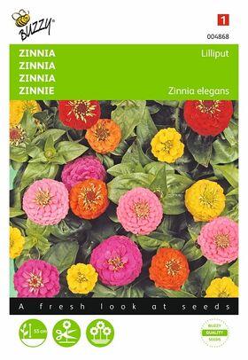 Graines de Fleurs Zinnia Lilliput