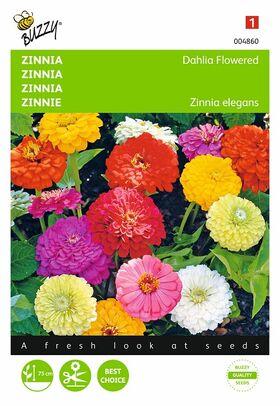 Graines de Zinnia à Fleur de Dahlia