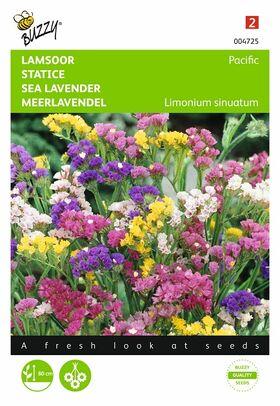 Graines de fleurs Statice Pacific
